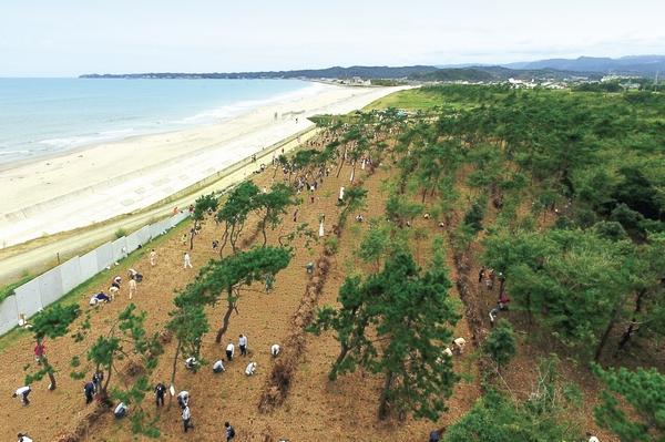 植樹された場所を上空から撮影